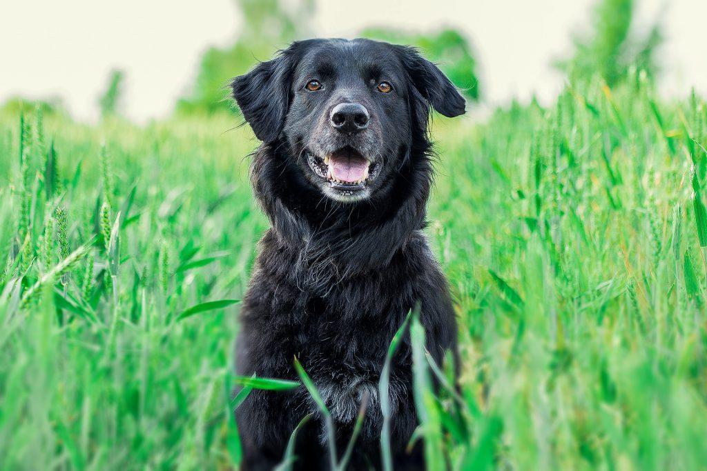 hondenuitlaatservice-wandeling